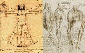 Science and art combined in da Vinci's Vitruvian Man
